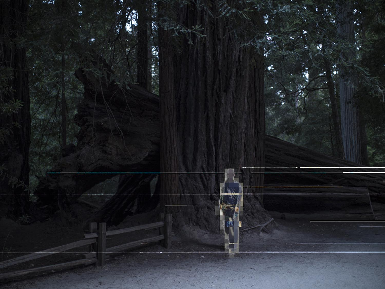 9_redwoods_web